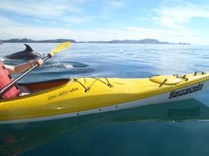 kayak-tours-dolpins-bay-of-islands