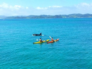 orca-sea-kayaking-new-zealand